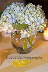 Hydrangea Bowl from Carter's Flower Shop in Farmville, VA