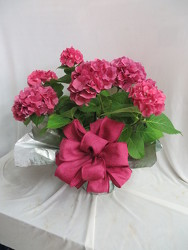 Pink Hydrangea from Carter's Flower Shop in Farmville, VA